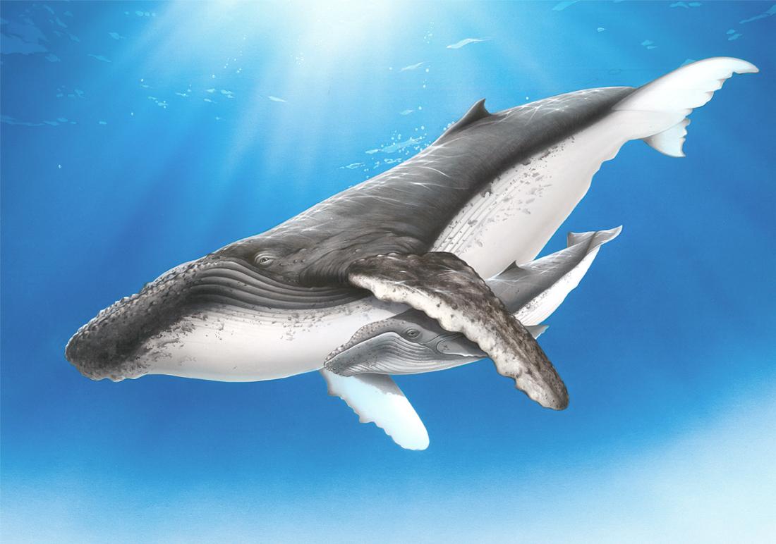 http://sea-environment
