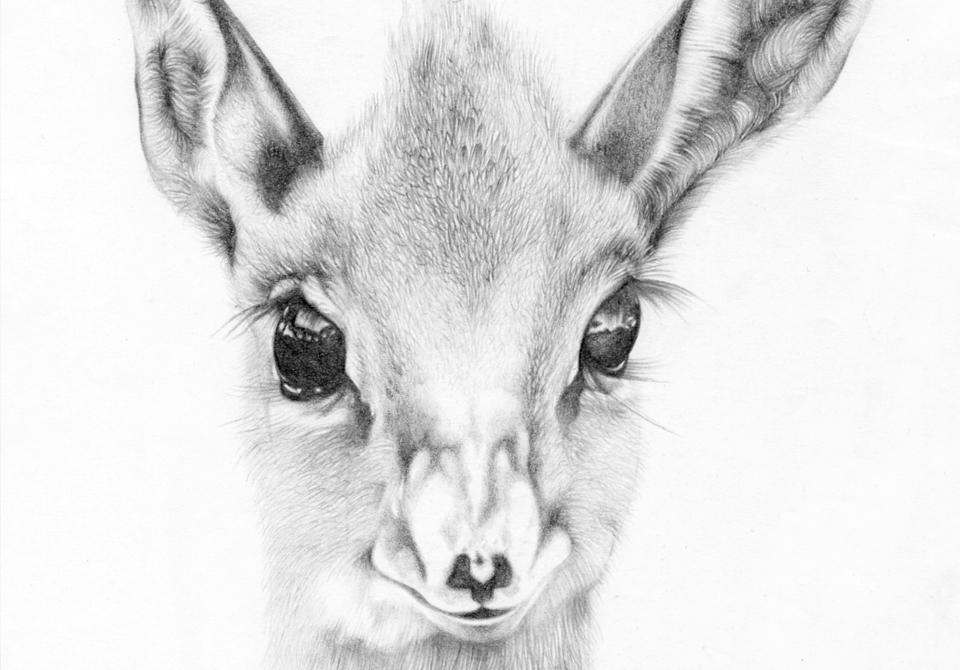 portrait_antelope_puppy