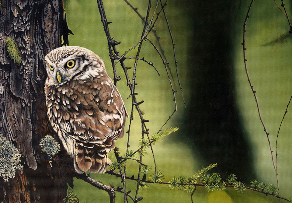 wildlife-oil-painting-owl-on-a-branch