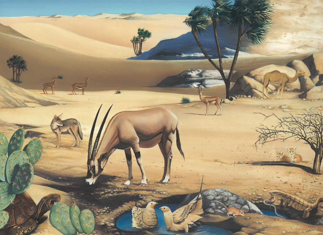 http://Sahara-desert