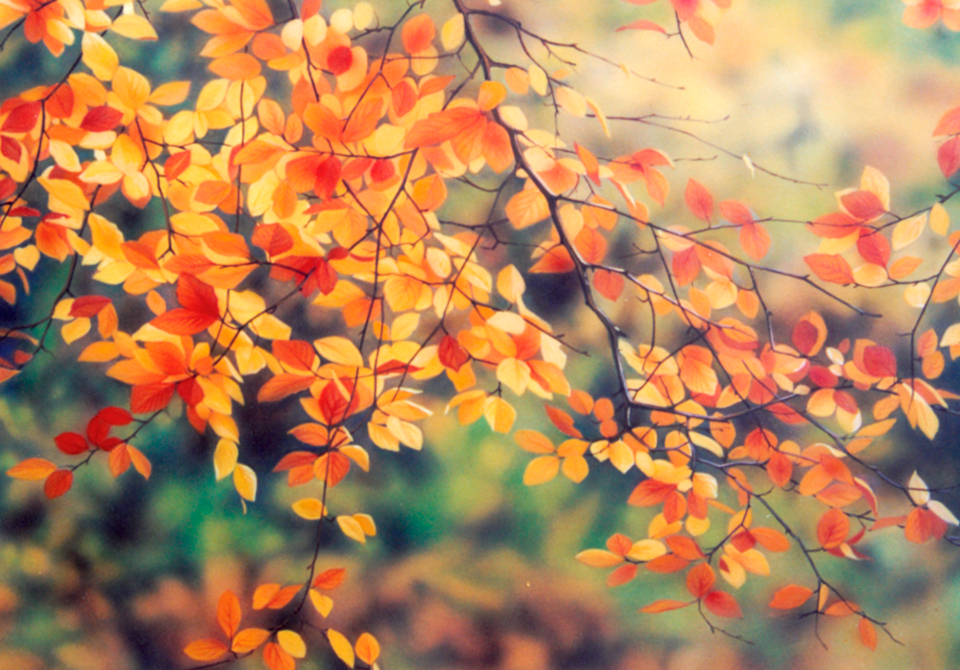 http://Autumn-Leaves