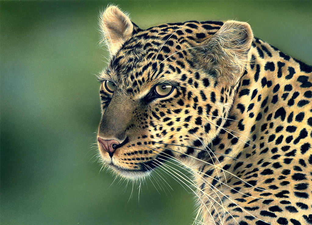 wildlife-painting-leopard-portrait