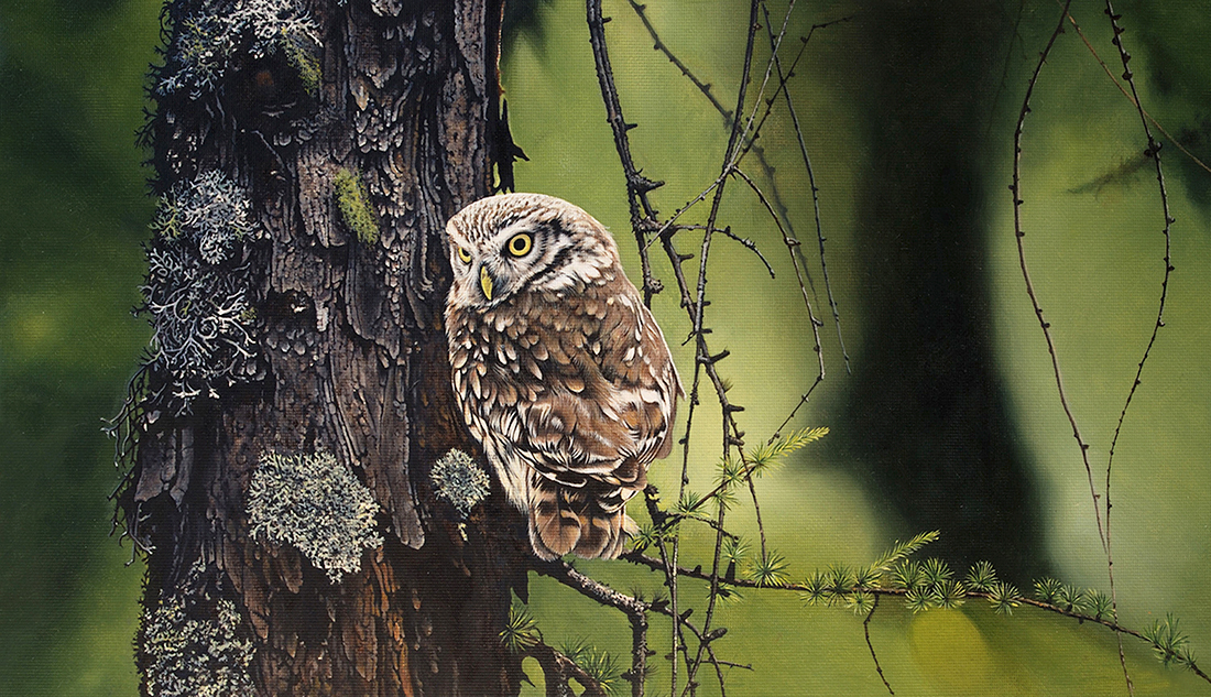 http://Oil%20painting%20of%20a%20crouched%20owl%20on%20a%20branch