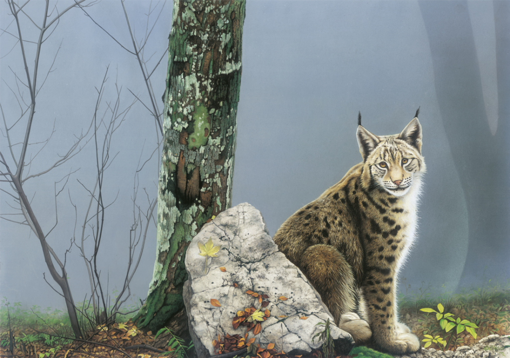 lynx wildlife painting