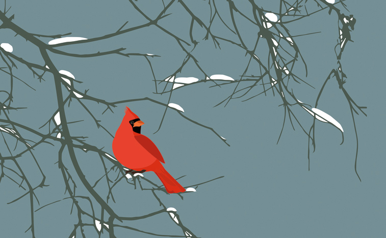 Cardinal_leaning_on_branch