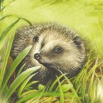 Hedgehog-n-the-grass